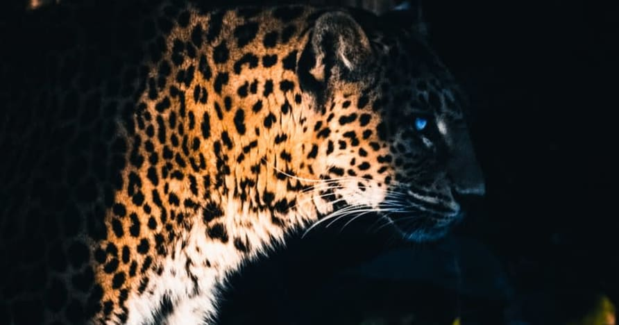 Yggdrasil Partners ReelPlay untuk Melancarkan Jaguar SuperWays dari Bad Dingo